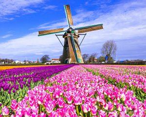 Hà Lan là thị trường nhập khẩu hạt điều chính của Việt Nam